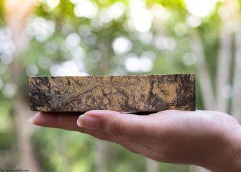Best Wood Hardener