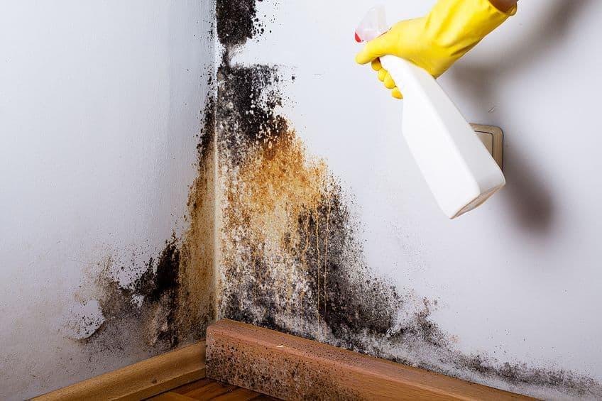 Does Bleach Kill Mold