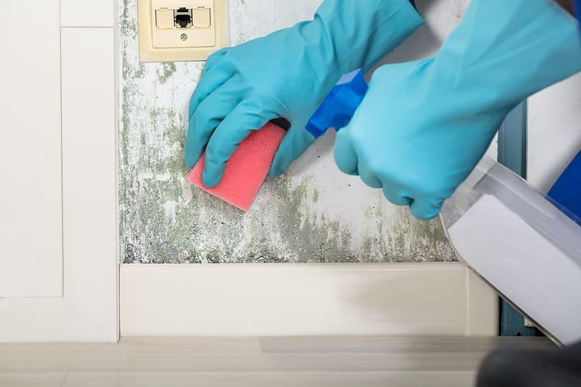 How to Clean Mold Off Wood