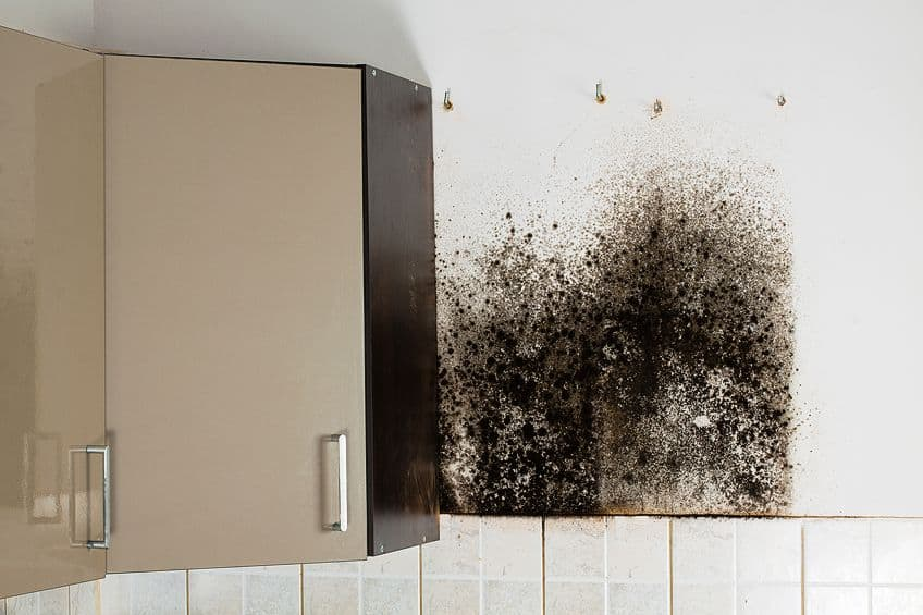 How to Remove Black Mold from Wood