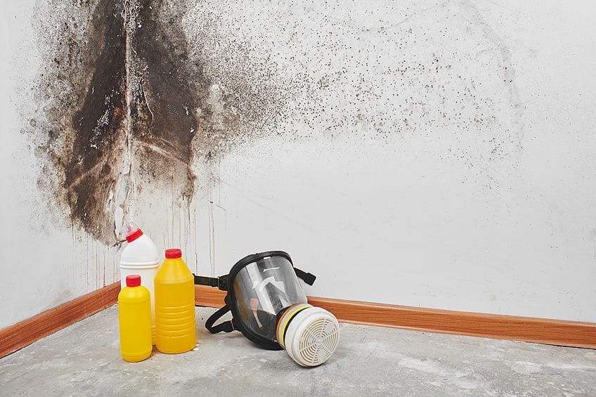 Mold Remover for Wood